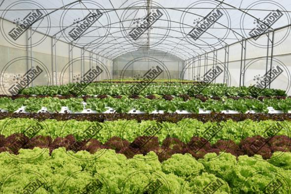 What are the advantages of biofertilizers?